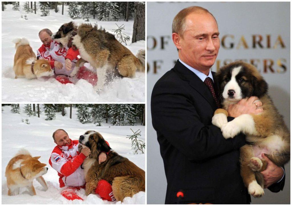 На фото изображен Владимир Путин с овчаркой Баффи.