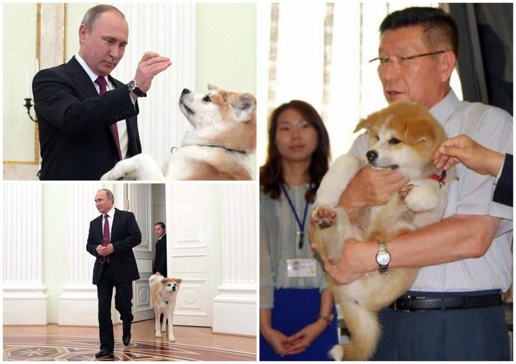 На фото изображен Владимир Путин с собакой акита-ину Юмэ.