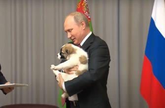 Владимир Путин со щенком.