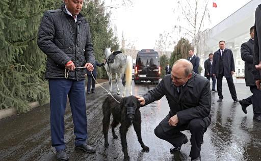 На фото изображен Владимир Путин и Тайган.