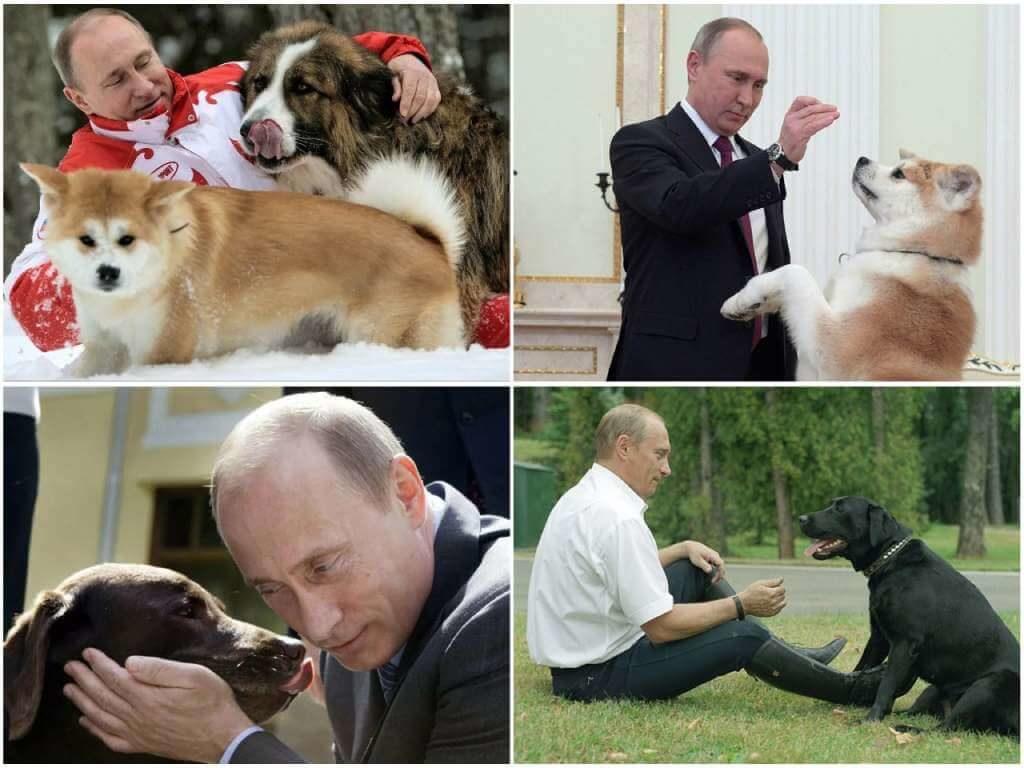 На фото Путин с собаками.
